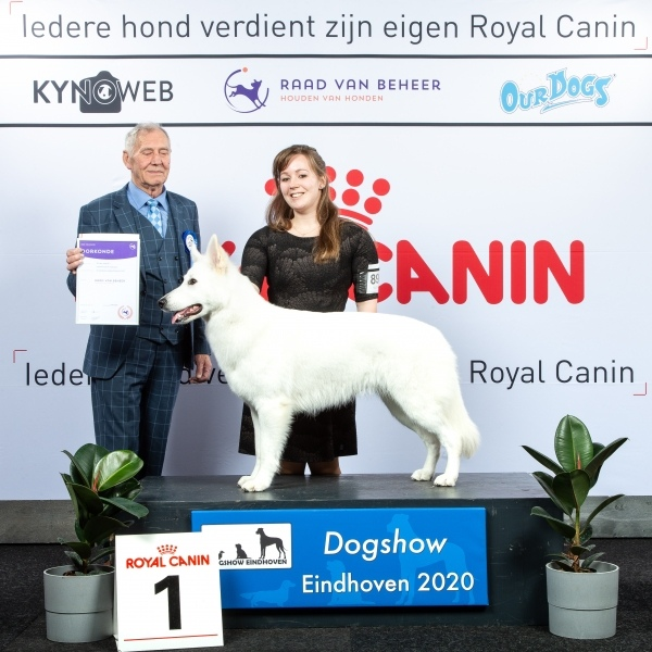 GROUP_1_1_COPYRIGHTFREE_DOGSHOW_EINDHOVEN_2020_KYNOWEB_KY3_2239_20200208_17_02_328336
