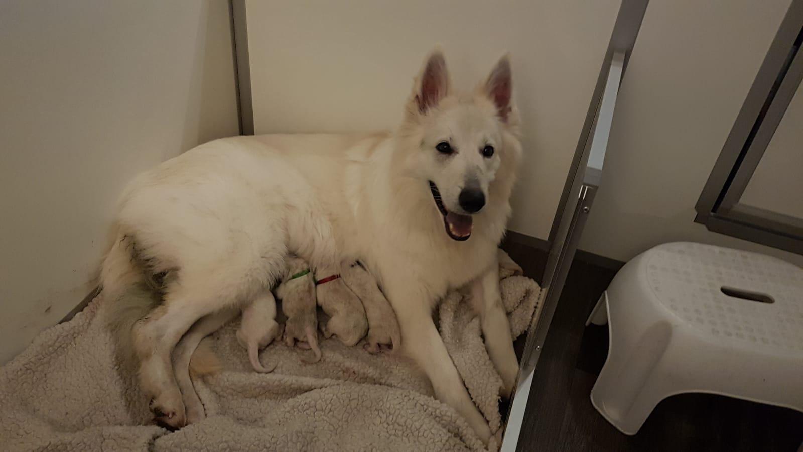 4 pupjes geboren