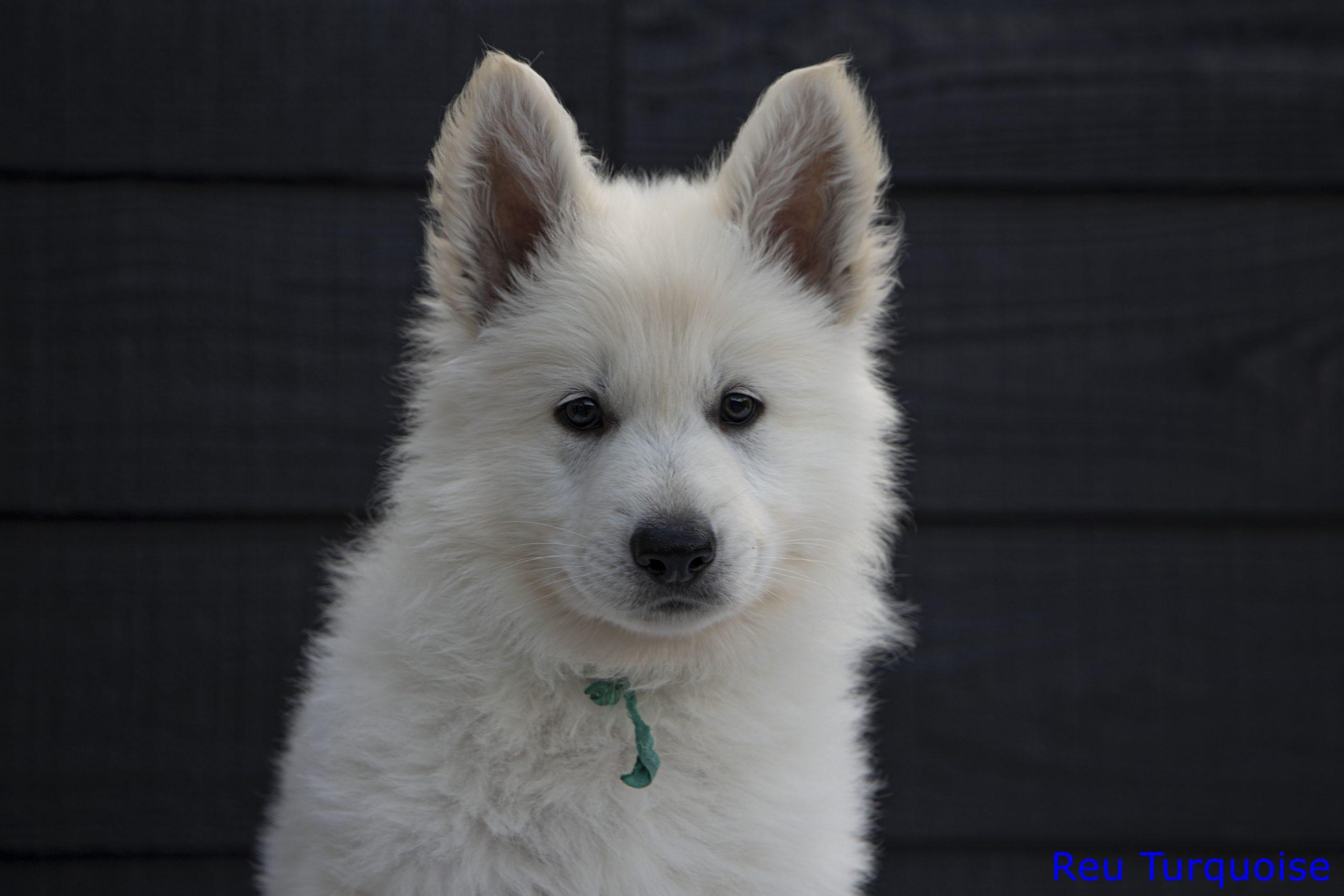 Pup 2 kop