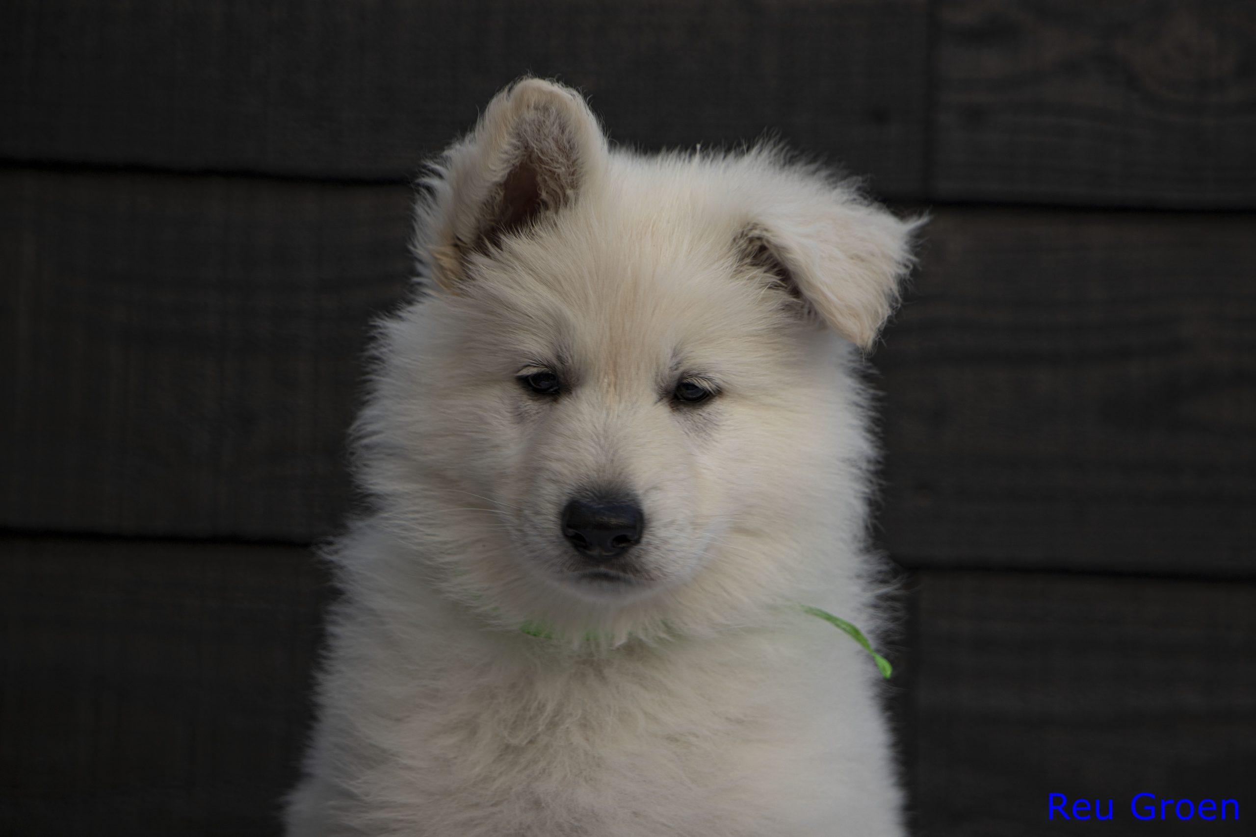 Pup 3 kop