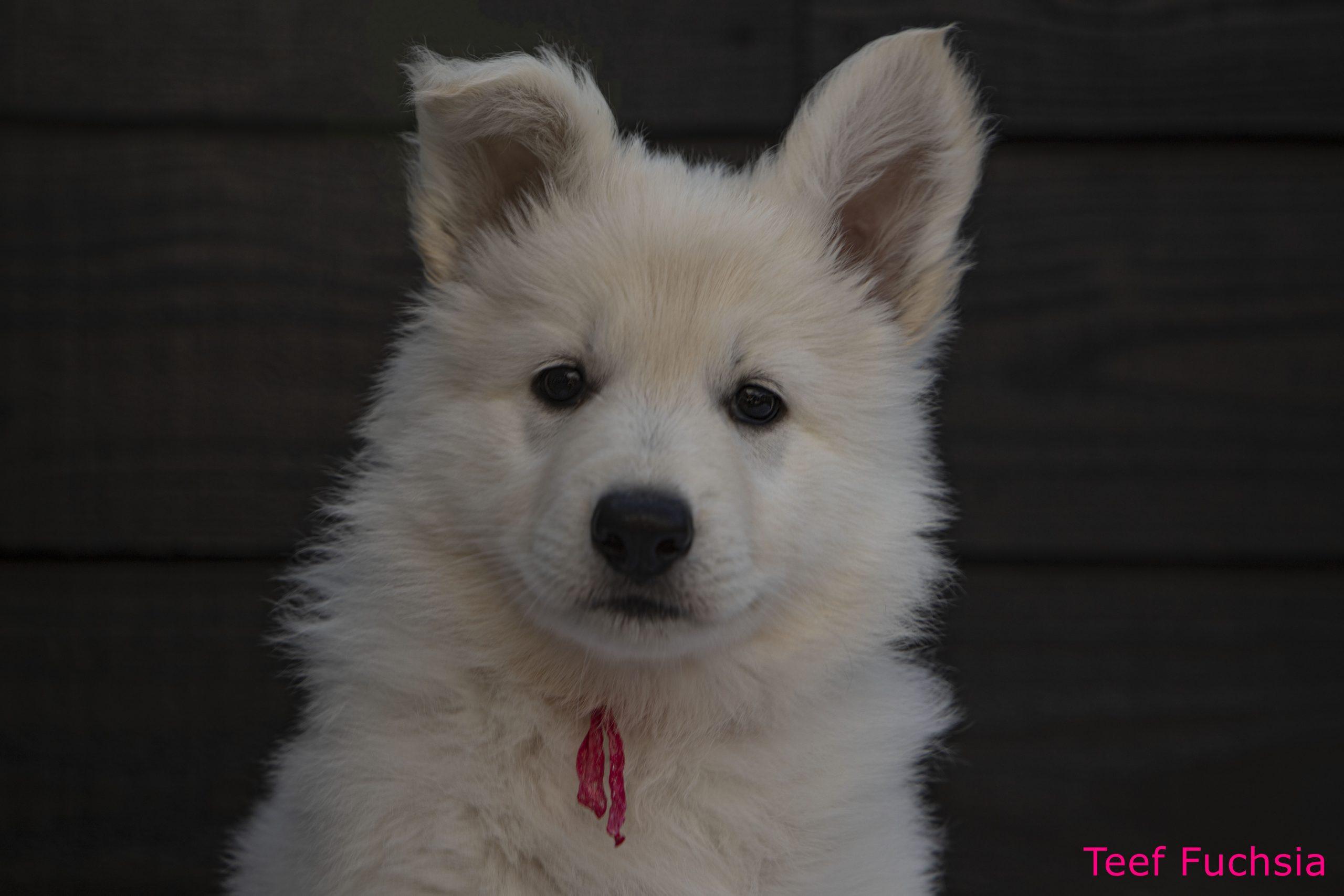 Pup 4 kop