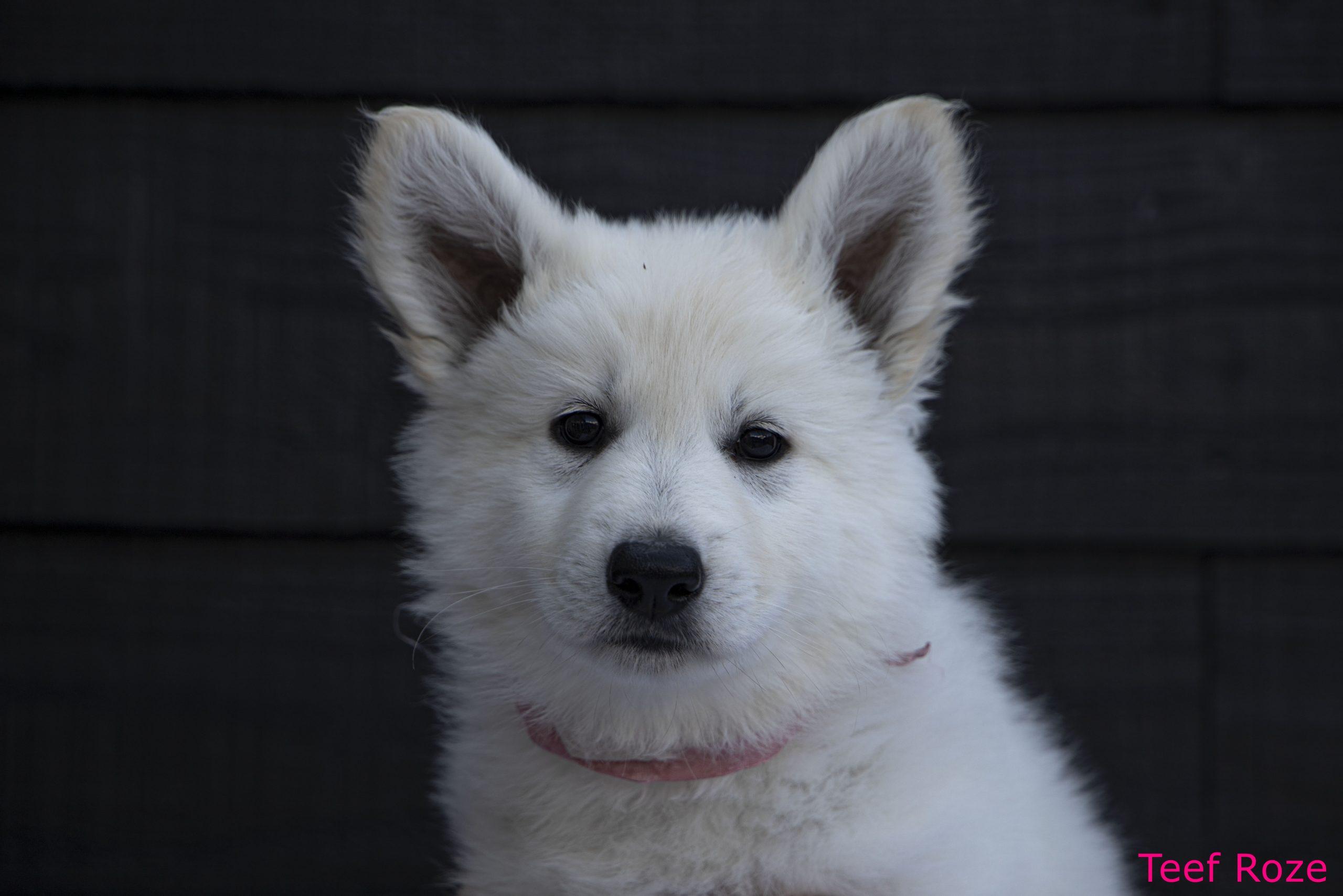 Pup 5 kop